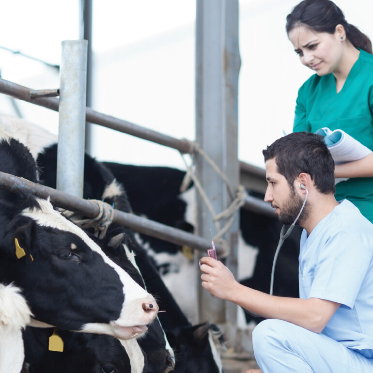 Milk production increased with temperature monitoring