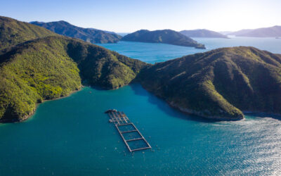 Adroit brings latest IoT tech to New Zealand King Salmon